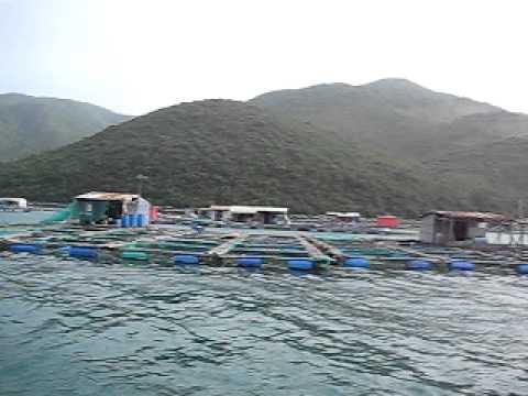 Nha Trang beach - jan 2011 (nuoi trong thuy san)