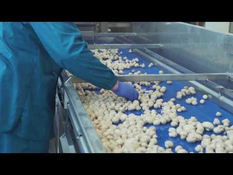 AUGA šviežių daržovių produkcija