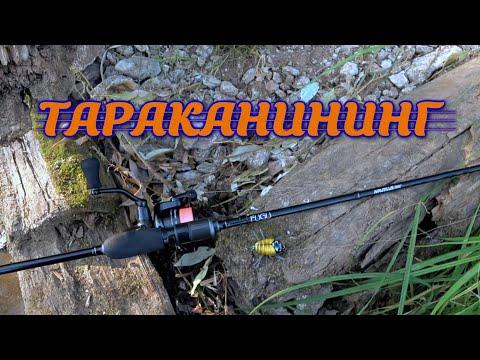 Тараканинг Ловля голавля на тараканы Как поймать голавля на таракана