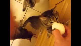 Любимая еда кошек это яйца