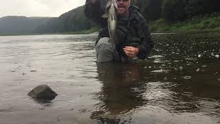 2018 09 06 Allegheny River 21 Smallmouth Bass