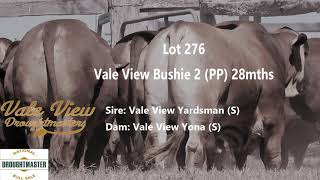 Vale View Bushie 2 - Lot 276 Droughtmaster National Bull Sale 2020