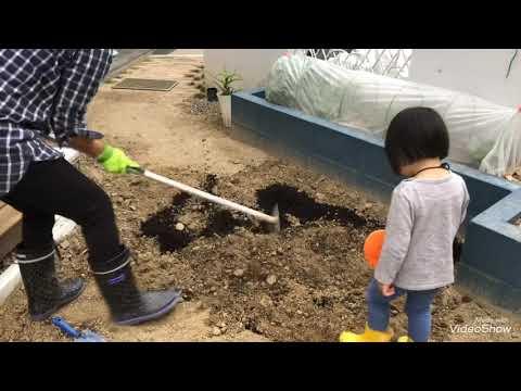 【DIY主婦】水はけの悪い庭と雑草対策にグランドカバーダイカンドラの種まきから発芽までの記録①