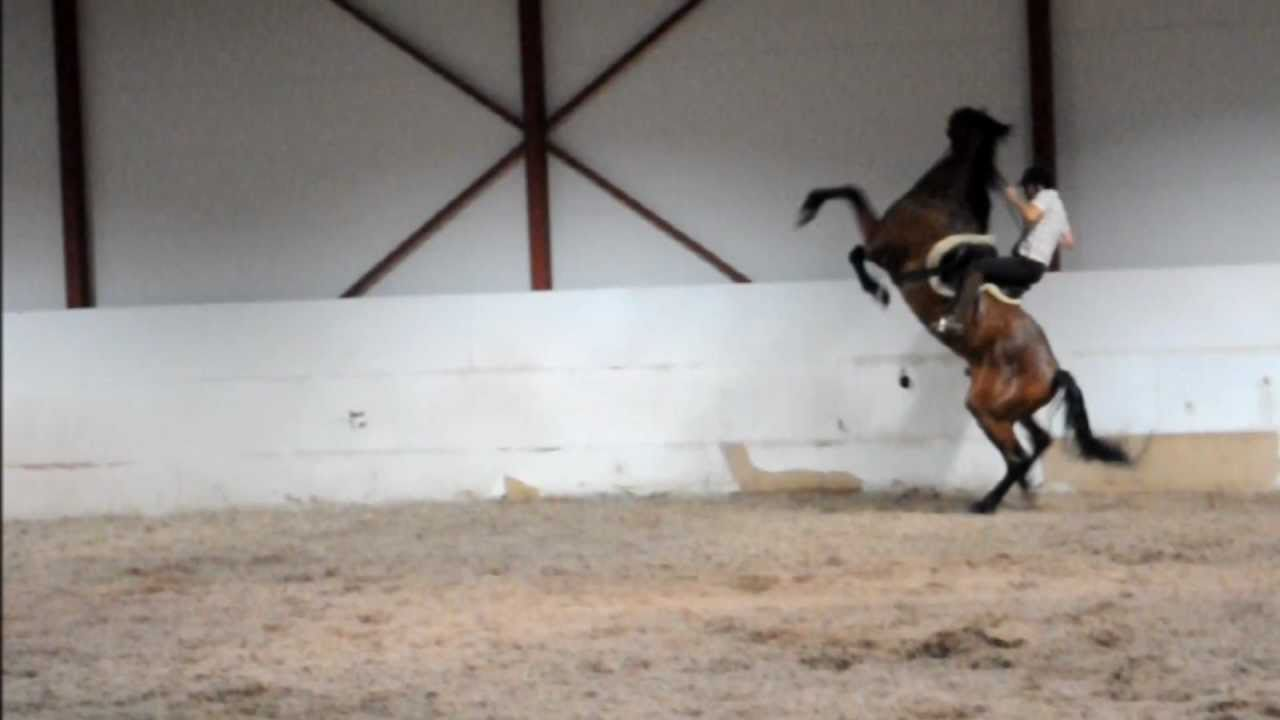 Wild Horses Rearing And Bucking Horse rearing (rider f...