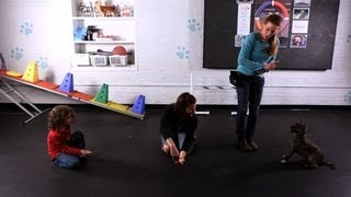 How To Involve Kids In Dog Training | Dog Tricks