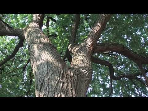 TREE APPRECIATION WALK BY BRONX RIVER SANKOFA