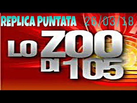 le repliche dello zoo di 105