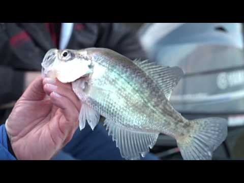 Roger Gant And Russ Bailey Deep Water Crappie Fishing On Pickwick Lake