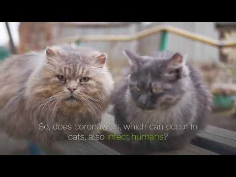 Coronavirus Is Transmitted From Cats To Humans? The Expert Announced… #StayHome #WithMe