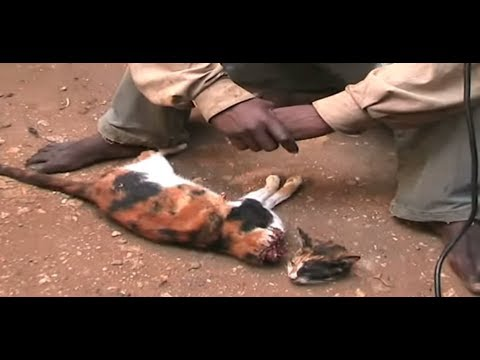 Mombasa man selling cat meat to hotel owners