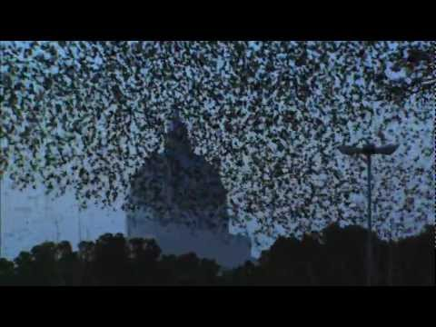 ULTIMATE MURMURATION - PEREGRINE HUNTS STARLINGS IN ROME - EARTHFLIGHT