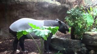 zoos extinction and natural habitats