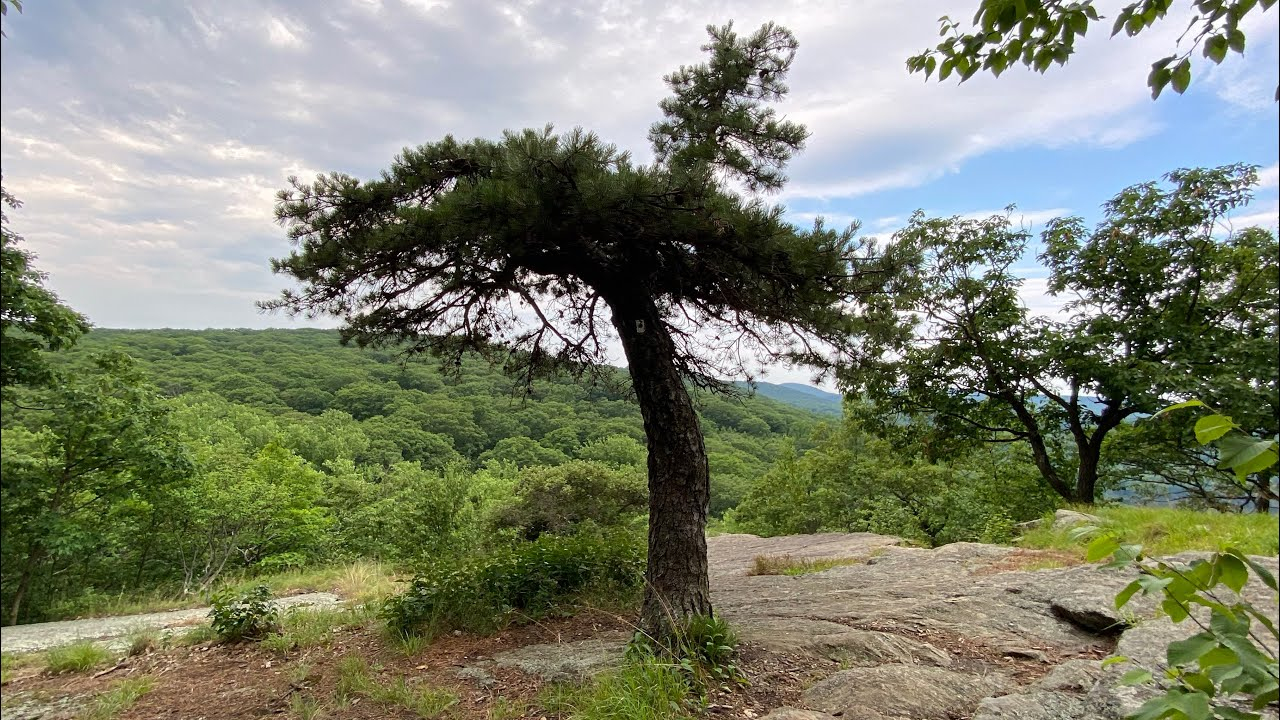 Day 32 Appalachian Trail 2020 Flip Flop