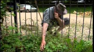 River Cottage | Hugh Fearnley-Whittingstall | Hedgerow