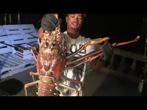 Giant spiny lobster caught in Bermuda