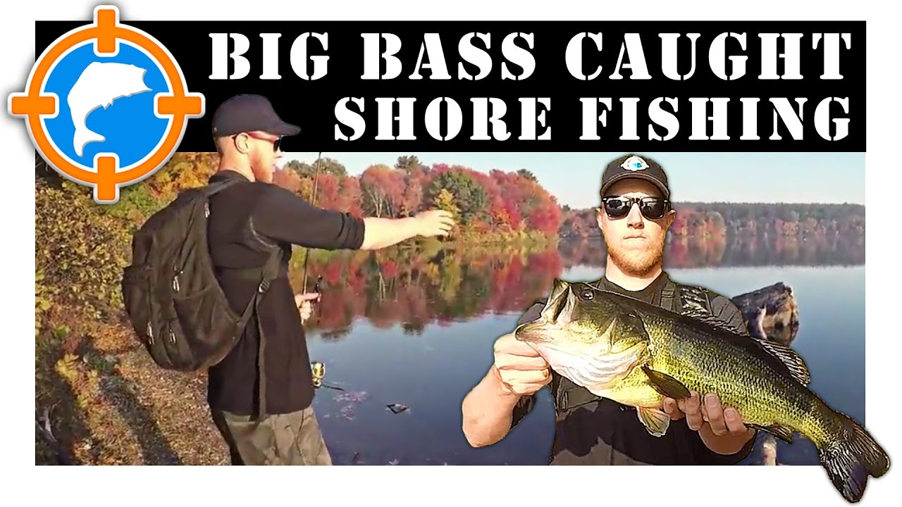Big bass caught while shore fishing sudbury reservoir for Bass fishing from shore