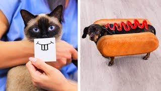 17 Pegadinhas e Truques Engraçados Para Animais De Estimação