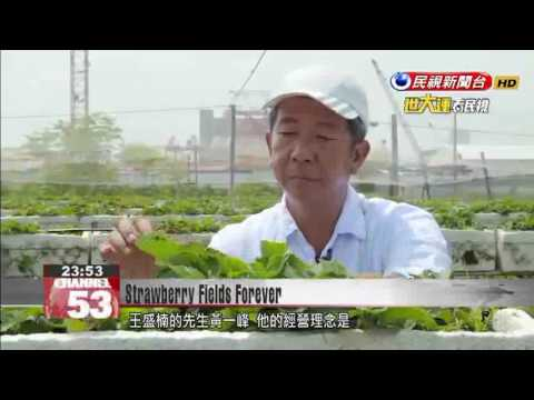 Chinese Immigrant Grows Organic Strawberries