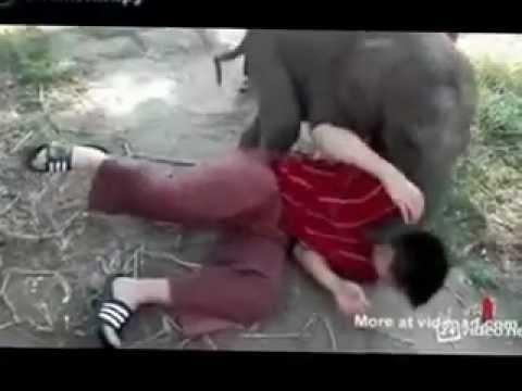Милый и нежный слонёнок