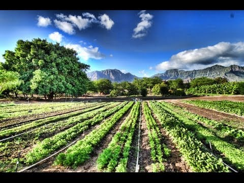 Kahumana Organic Farm & Cafe, Something Beautiful (Wwoof)