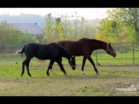 Horse club Pampas (Osijek)