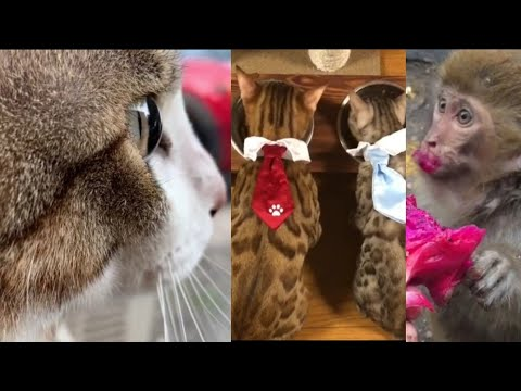 Pet animals funny video / pet animals playing video / new pet animals prank video