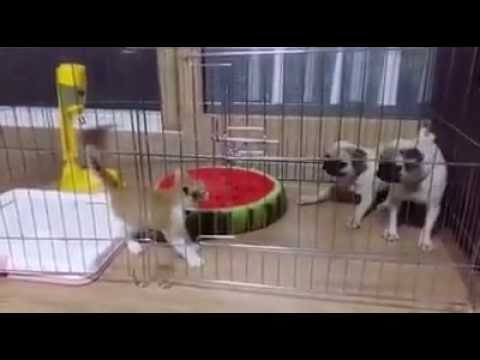 2 dogs vs cat ^^