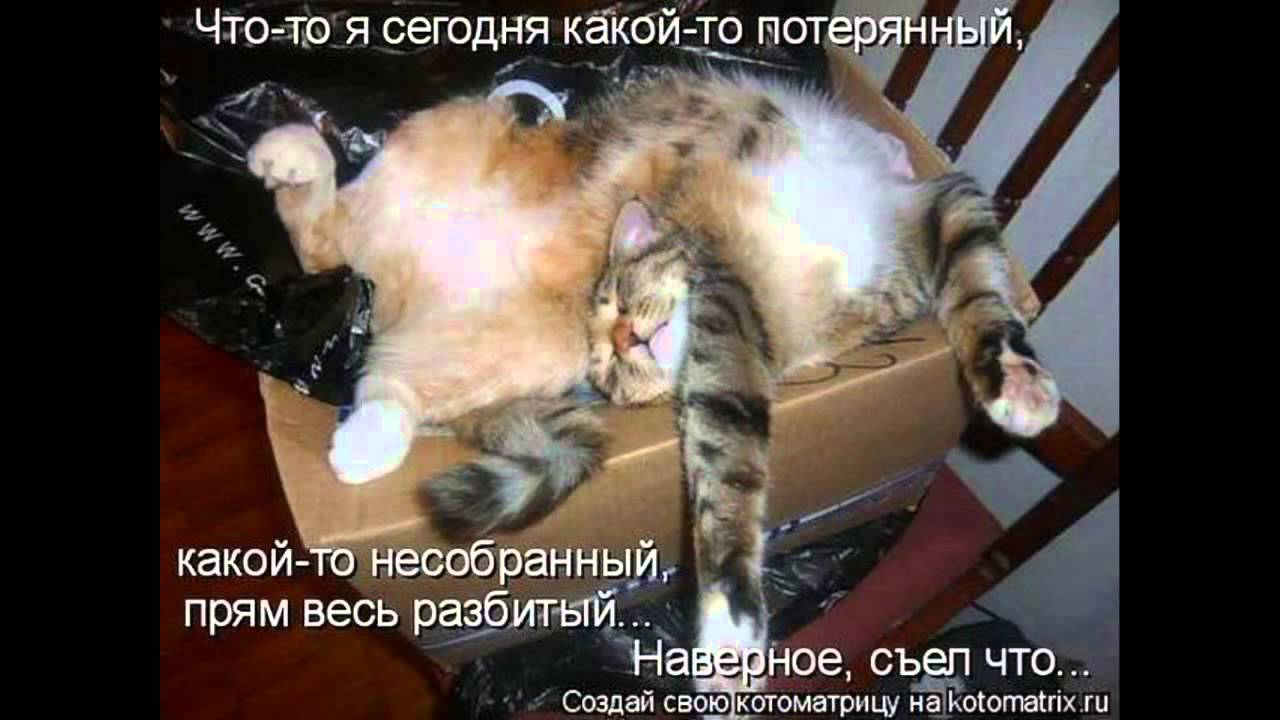 картинки приколы с животными кошками - YouTube