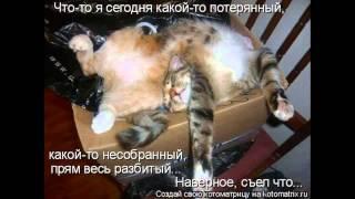 картинки приколы с животными кошками