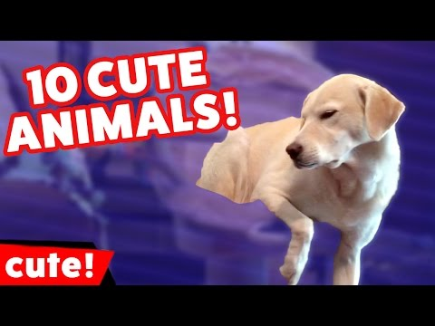 Top 10 Funniest Cute Pet & Animal Clips, Bloopers & Outtakes Weekly Compilation | Kyoot Animals