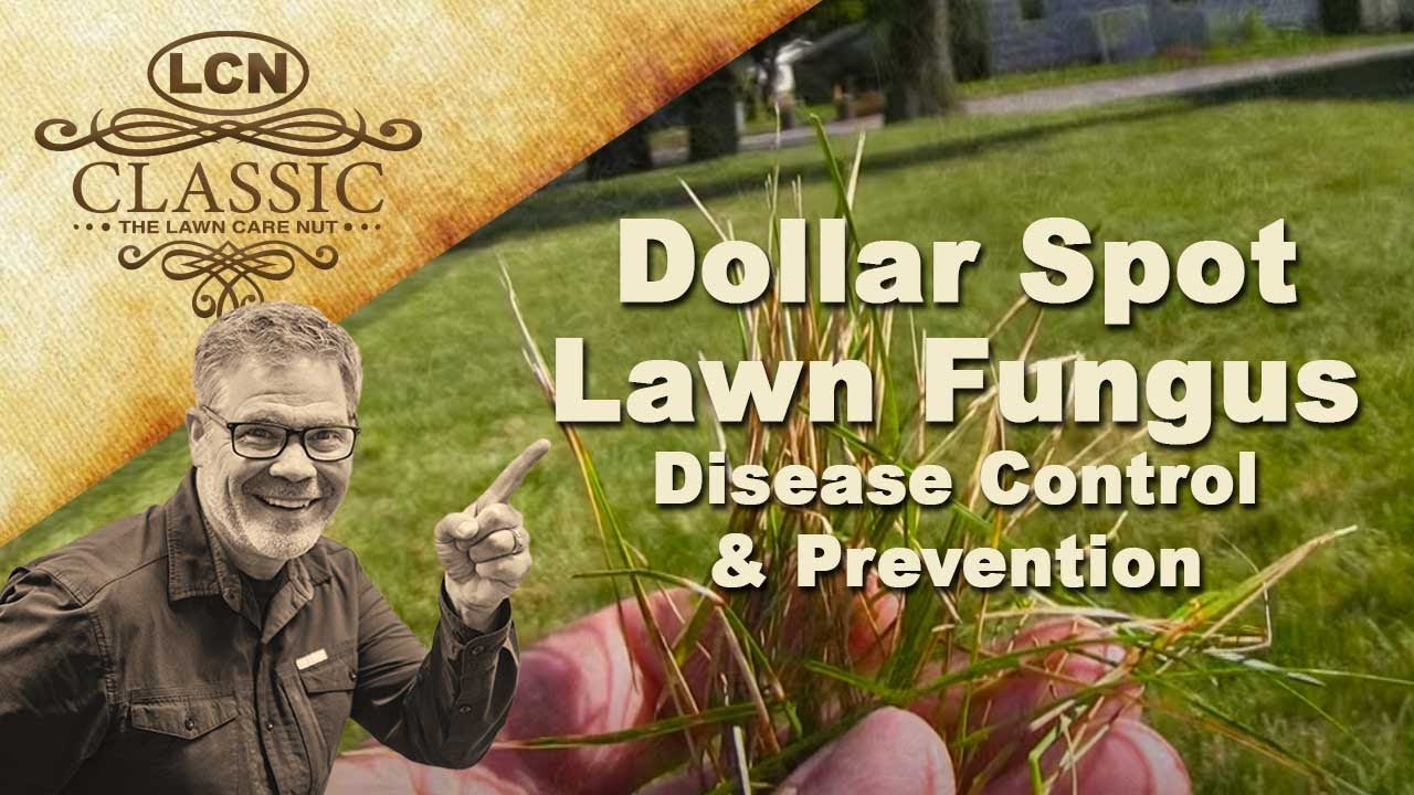 Dollar Spot Lawn Fungus Disease Control And Prevention Youtube