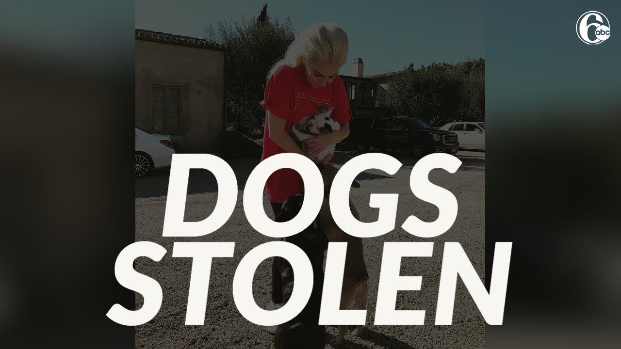 Lady Gaga's dogs stolen in Hollywood; man walking French ...