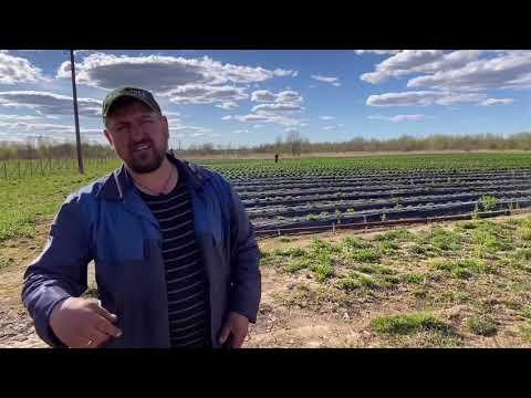 АгроСтартАп или грант как начинающий фермер, ожидание и реальность!