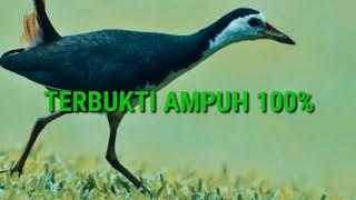 Gambar cover DIJAMIN! SUARA RUAK-RUAK PEMIKAT! AUTO DAPAT BANYAK!!!