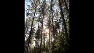 Trapp Family Singers - Folk Songs (1)