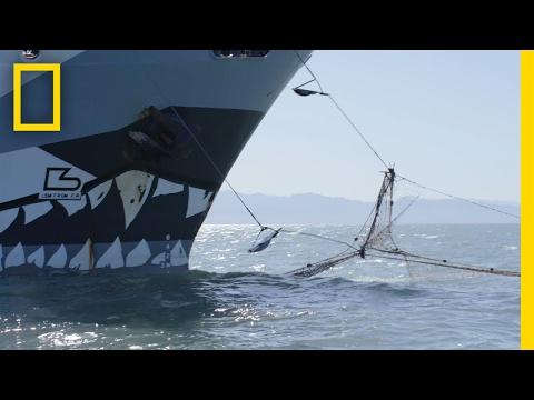 Defending Marine Wildlife   Explorer