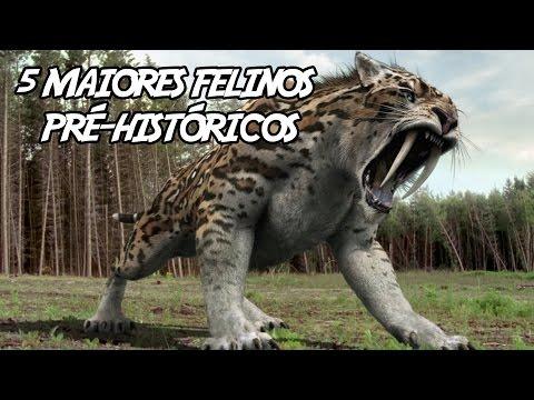 Veja o video – 5 Maiores Felinos Pré-Históricos (que já existiram)