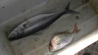 Вылов рыбы! (226)