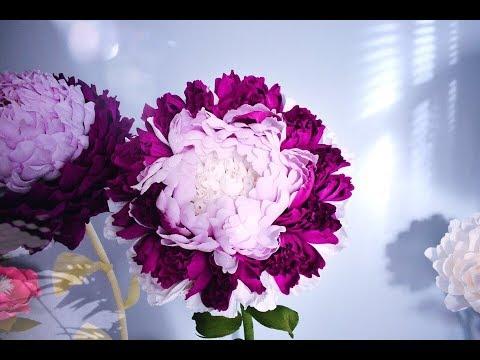 обработка фото больших цветов.