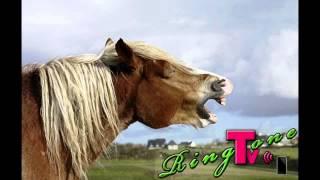 Horse Sound - Ringtone
