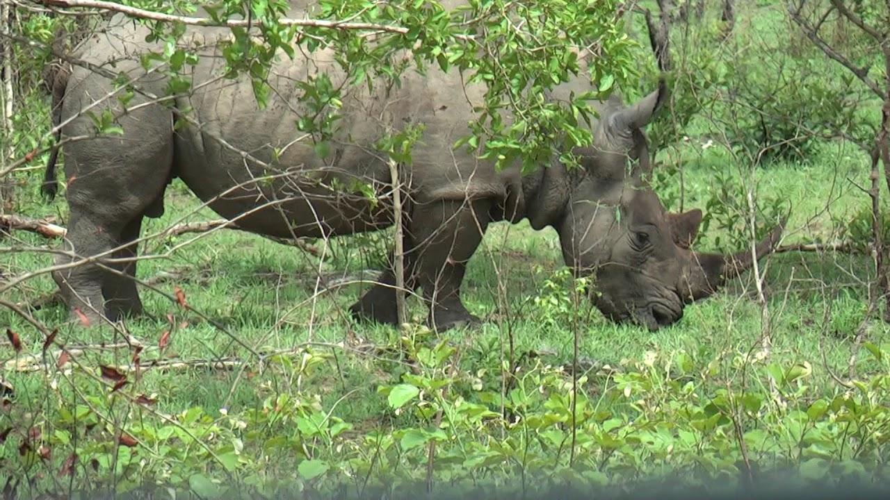 Rinocer într un scaun - primariacetateni.ro