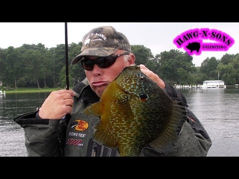 BEST Fishing BIGGEST Pumpkinseed Sunfish Fish Ever - Bluegill Panfish