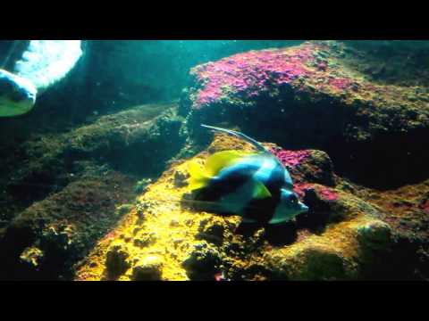 SEA LIFE Aquarium | Timmendorfer Strand | Germany |