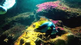 SEA LIFE Aquarium | Timmendorfer Strand | Germany |