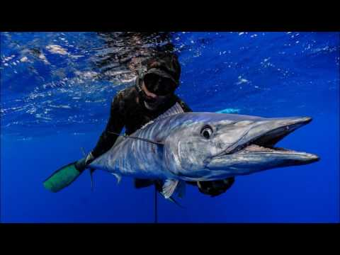 The Expedition of Ascension Island (Spearfishing) - 2016
