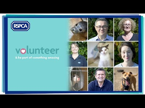 RSPCA Volunteer