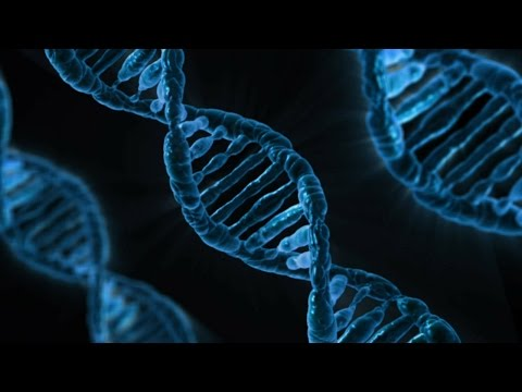 What are DNA and Genes?