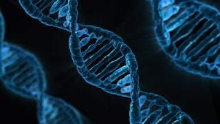 What is DNA and Genes?