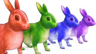 Learn Colors With Rabbit Animals W Hat & Learn Fruit Names Colours Videos For Kids