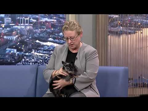 Seattle Animal Shelter Foundation